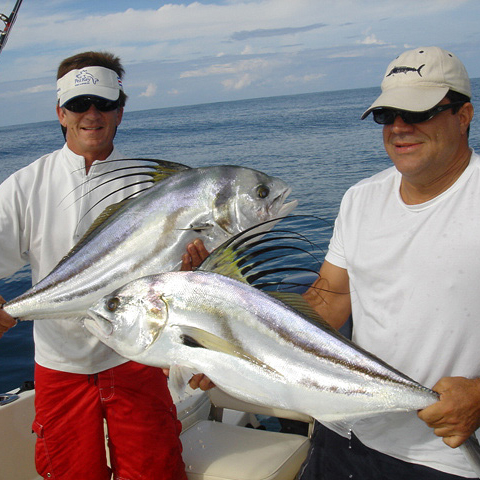 costa rica roosterfish